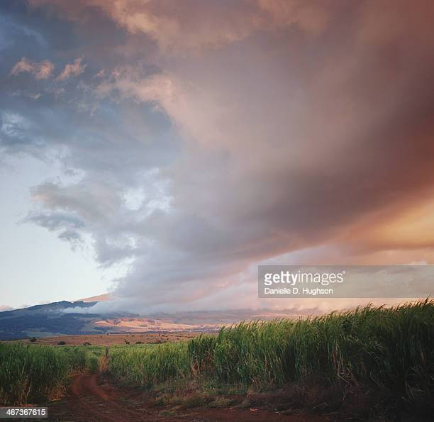 Sunset Over Sugarcane Fields
