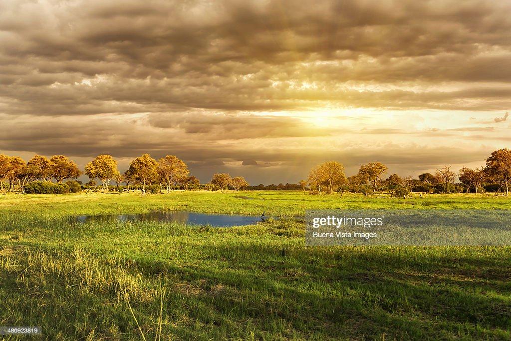 Sunset over  swamp in Okavango Delta