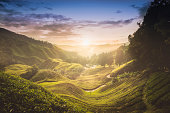 Sunset over tea plantation in Malaysia