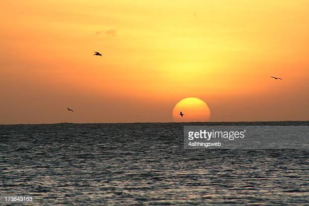 Pôr do sol sobre o oceano com pássaros