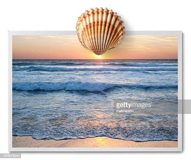 Sunset over the sea. Postcard with shell.