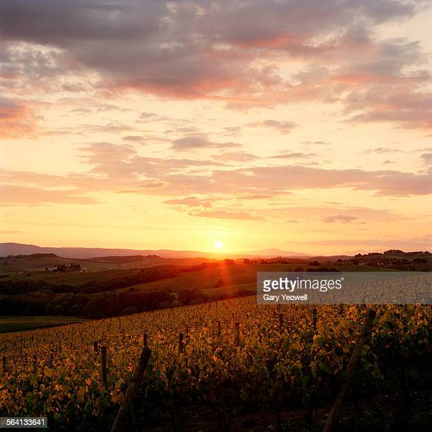 Sunset over vineyards in Chianti