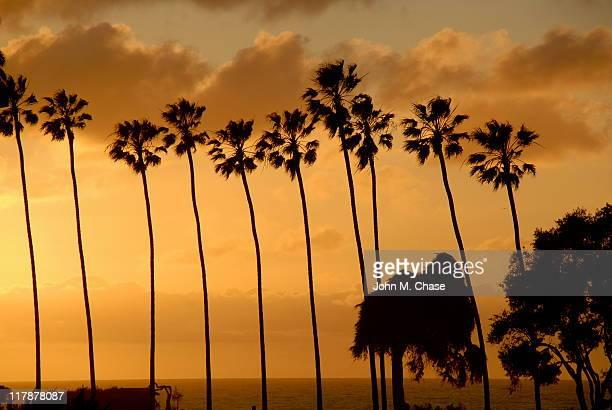 Árvores de palma ao pôr do sol
