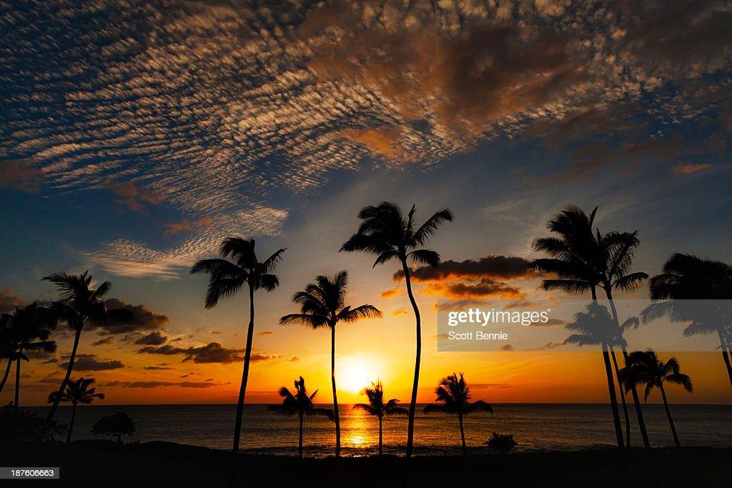 Sunset palm trees : Stock Photo