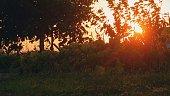 Sunset In Park