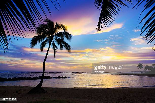Sunset Sihouette Palm Tree on Poipu Beach, Kauai, Hawaii