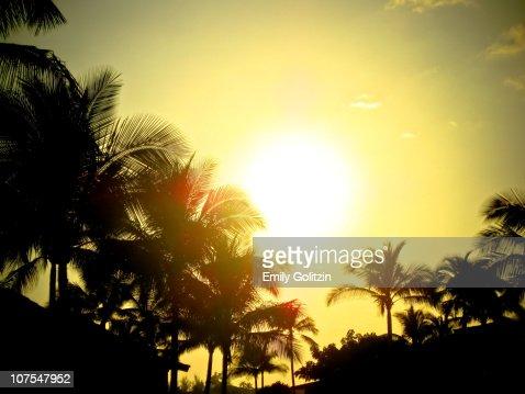 Sunset through palm trees, Hawaii
