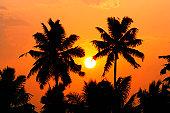 Sunset through palm trees (Palma sp.)
