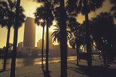 Sunset through palm trees , Tampa , Florida