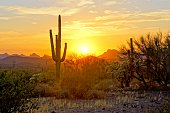 Sunset view of the Arizona desert with Saguaro cacti and mountains
