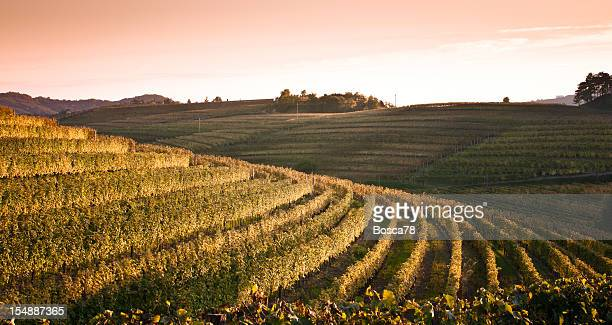 Paesaggio Tramonto vista su vigneti nel nord Italia