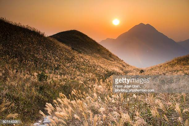 Sunset with Grass Blossoming