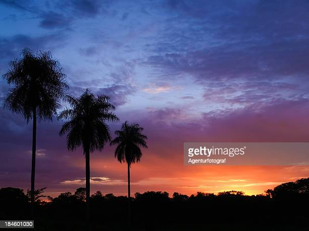 sunset with palm trees in Paraguay