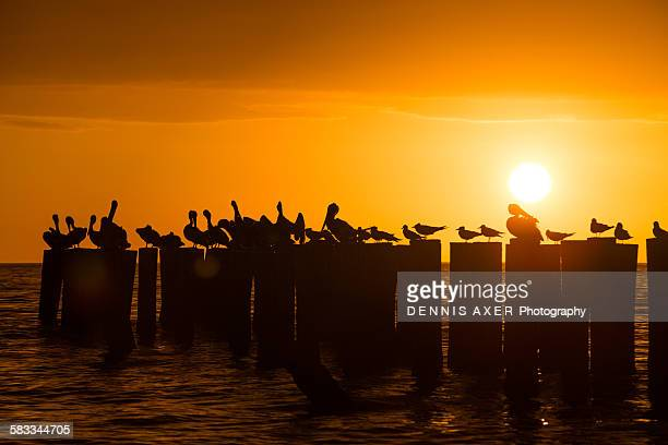 Sunset with waterbirds