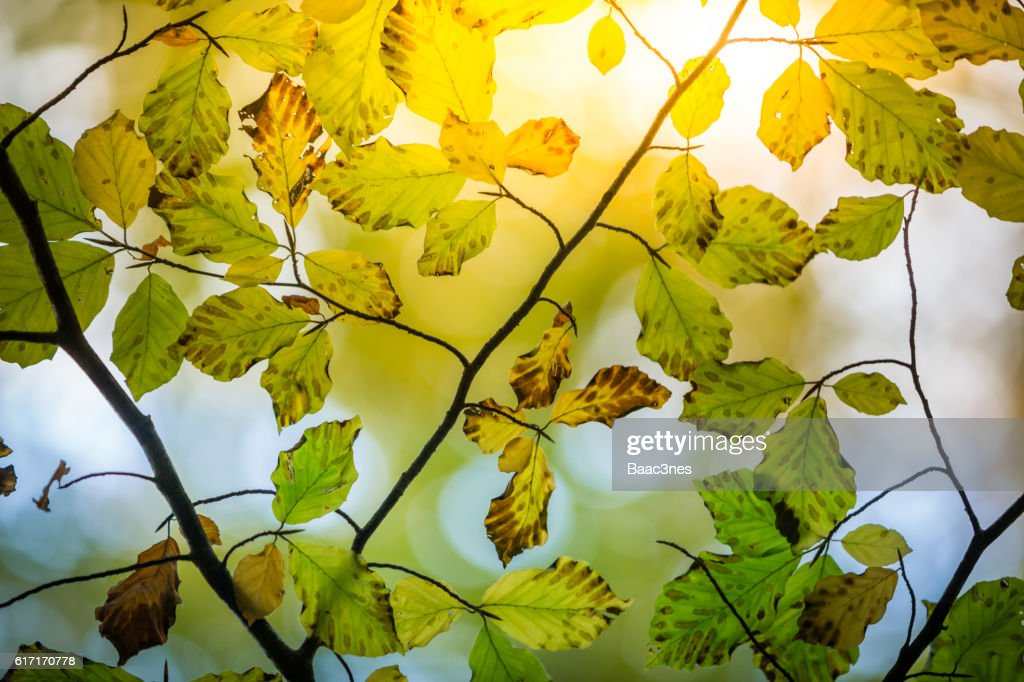 Sunshine and close-up of some autumn leaves : Stock Photo