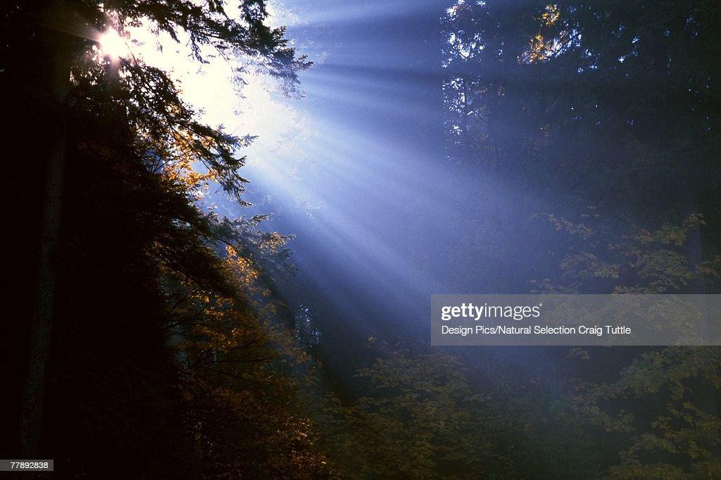 Sunshine bursting light into darkness : Stock Photo