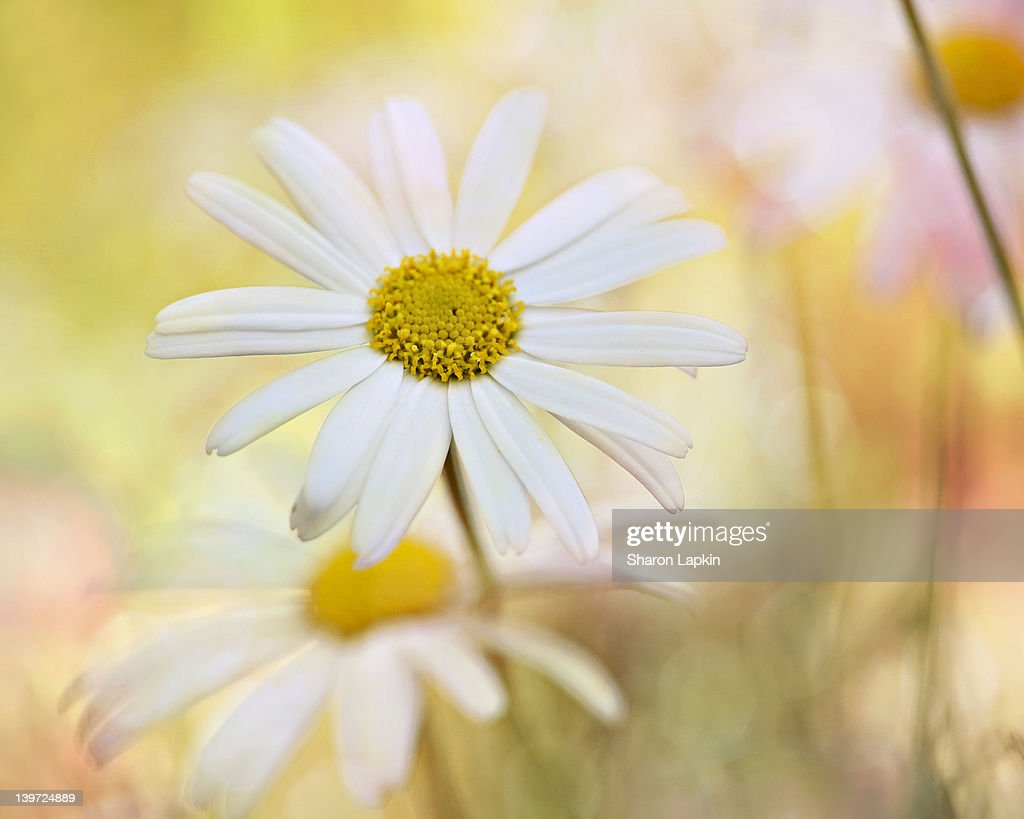 Sunshine flowers : Stock Photo