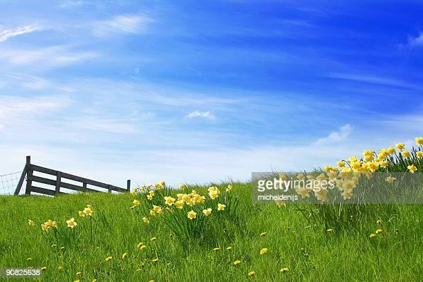 Sunshine Landscape