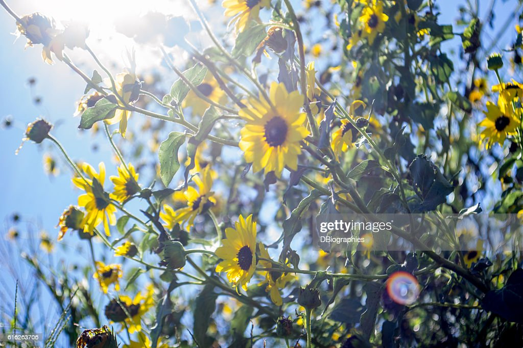 Sunshine : Stock Photo