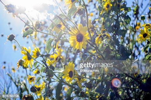 Sunshine : Stock Photo