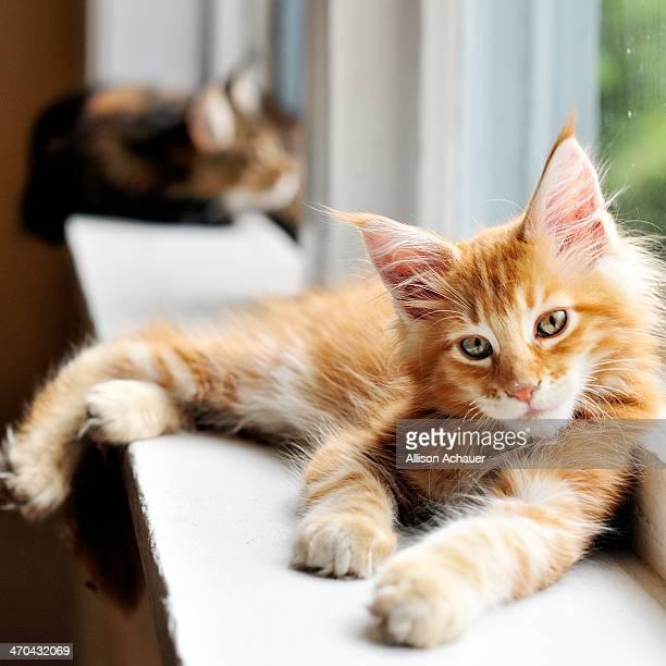 Super Casual Kitten