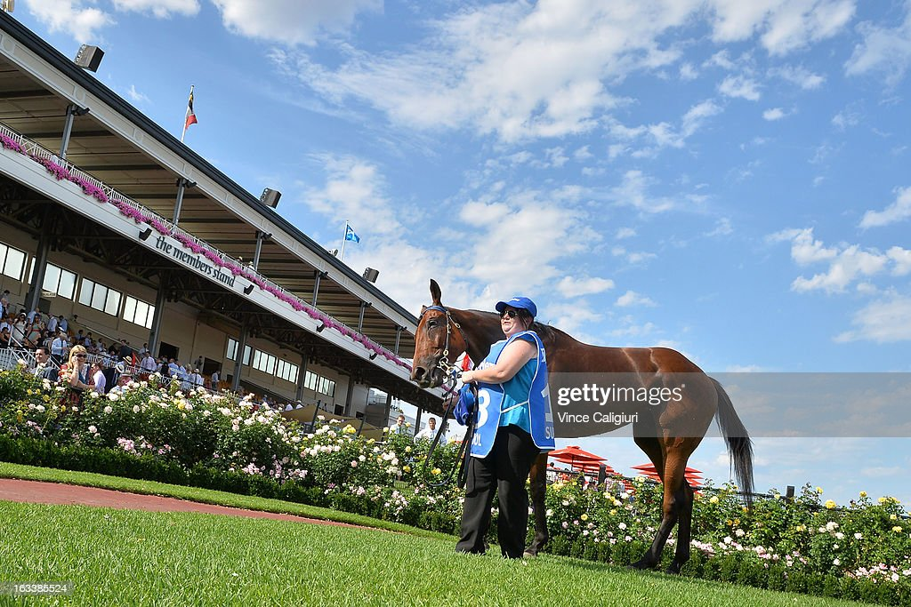 Super Cool after winning the Darley Australian Cup during Super Saturday at Flemington Racecourse on March 9, 2013 in Melbourne, Australia.