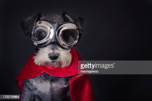 Super Dog : Stock Photo