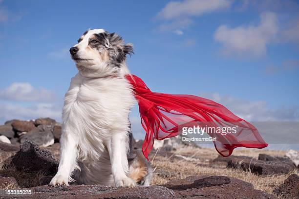 Super Hero Dog in wind