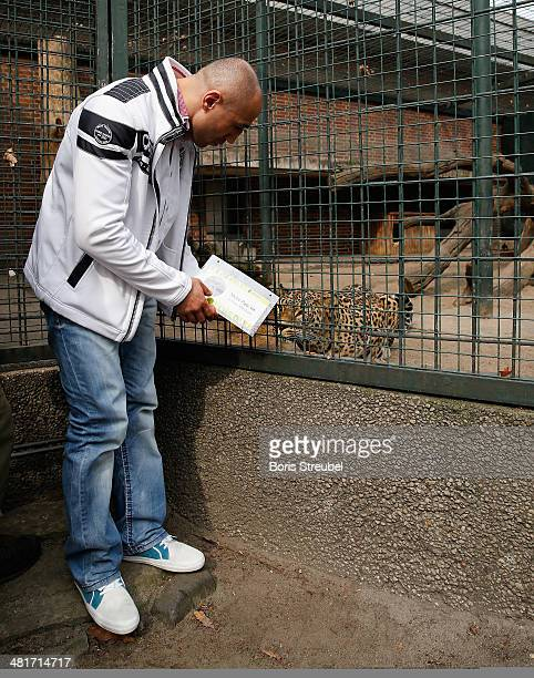 WBO super middleweight world champion Arthur Abraham adopts Shiva a baby persian leopard On the picture he interacts with Erivan the mother of...