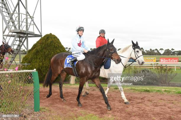 Super Mover ridden by Melissa Julius rerturns after the Di Giorgio Family Wines Apsley Cup at Hamilton Racecourse on June 11 2017 in Hamilton...