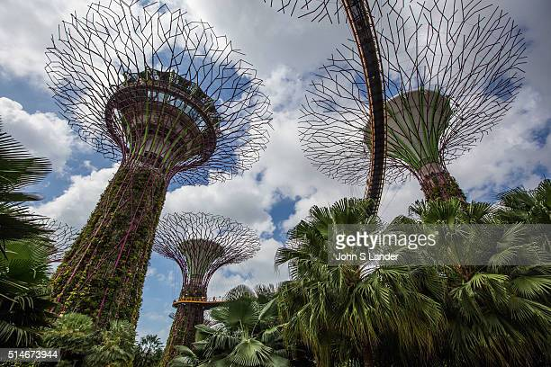 Supertree Grove is a uniquely designed vertical garden made up of artificial tall 'trees' Their canopies provide shade in the day and come alive at...