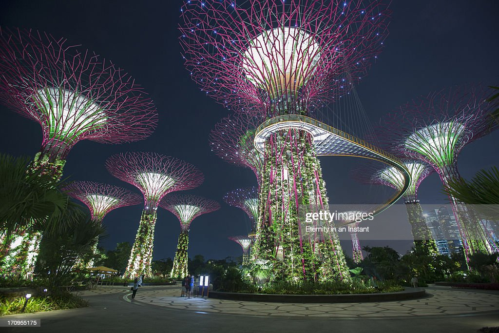 Supertrees in  Gardens by the Bay, Singapore
