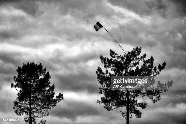 A supporter waves a French flag from the top of a tree along the road during the 2035 km eleventh stage of the 104th edition of the Tour de France...