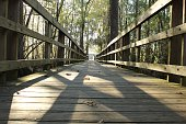 Surface Level Of Boardwalk In Forest