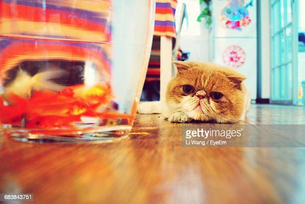 Surface Level Of Cat Looking At Fishbowl At Home