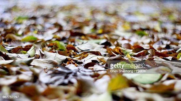 Surface Level Of Dry Leaves On Field During Autumn