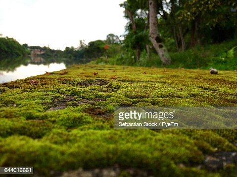 Surface Level Of Moss Covered Riverbank Against Clear Sky