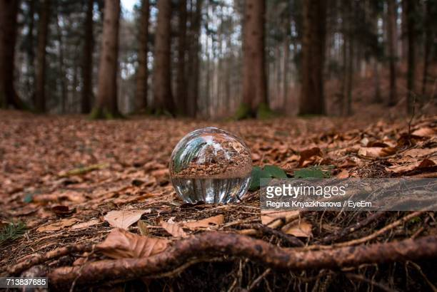 Surface Level View Of Crystal Ball And Trees In Forest