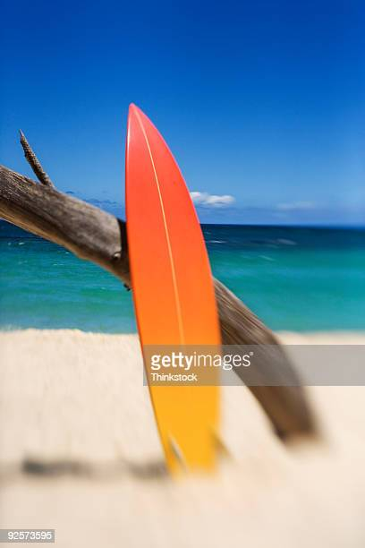 Surfboard and tree on beach