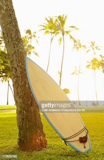 Surfboard leaning against tree in park