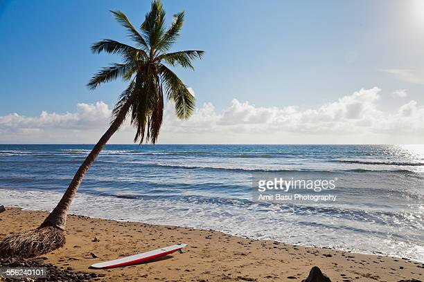Surfboard under coconut palm tree, Maui