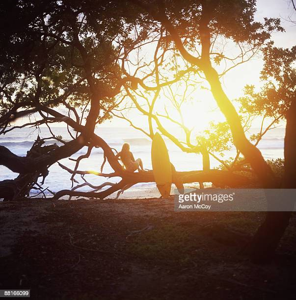 Surfer in silhouette on woodland seashore at sunset