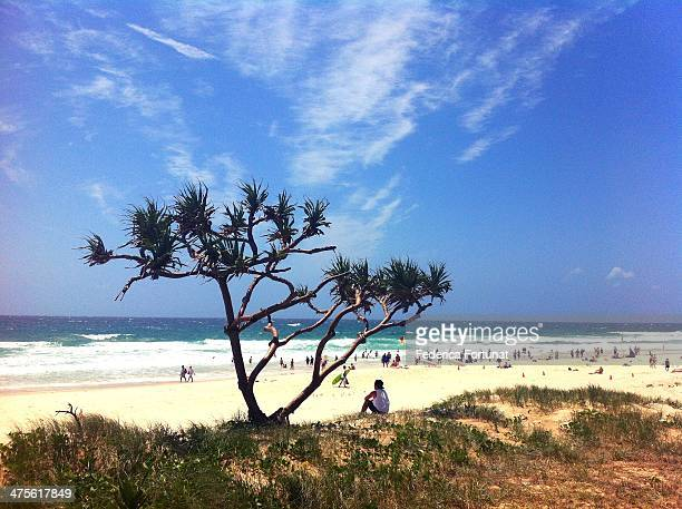Surfers Paradise beach and nature in sunny summer