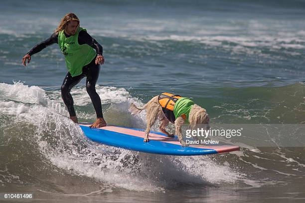A surfing dog and man compete in a tandem dog/human heat at the Surf Dog Competition at the 8th annual Petco Surf City Surf Dog event on September 25...