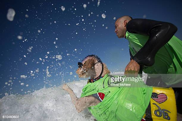 A surfing dog named Derby gets help fighting through incoming surf to go out to catch waves during the Surf Dog Competition at the 8th annual Petco...