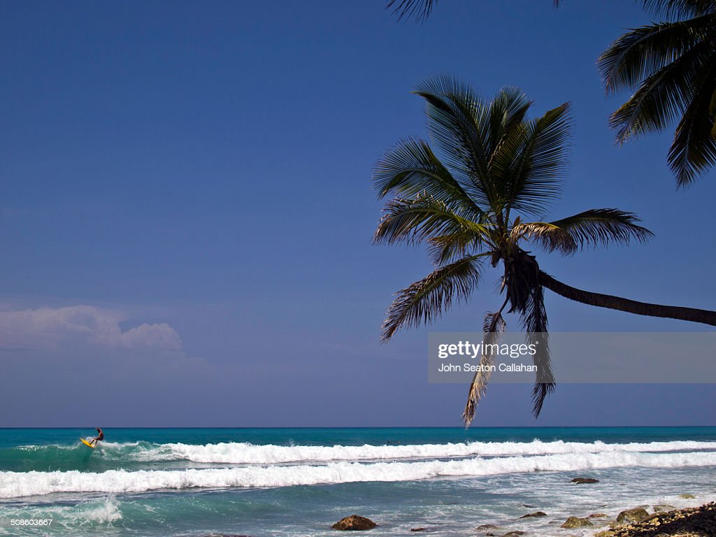 Surfing in the Caribbean Sea : Stock Photo