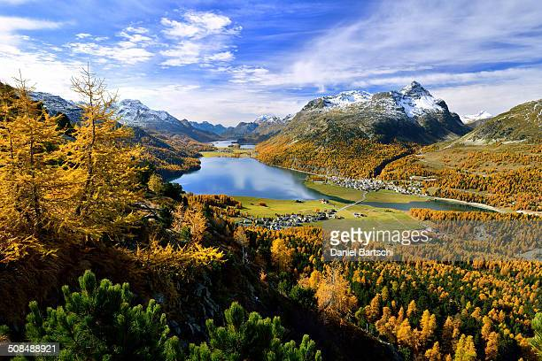 Surlej, Silvaplana with Upper Engadine lakes and autumn-coloured larch forests, Lake Champfer, Lake Silvaplana, Lake Sils, Engadin, Graubunden, Switzerland