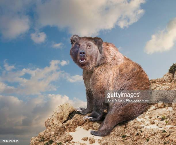 Surprised bear at edge of rocky cliff under cloudy sky