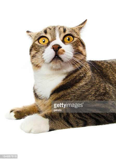 Überraschte Katze