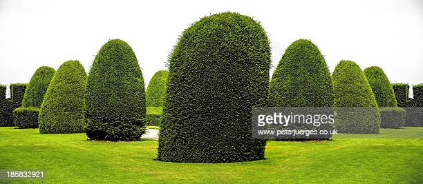 Surreal architectural topiary